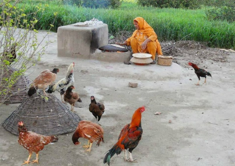 Punjab life in Village
