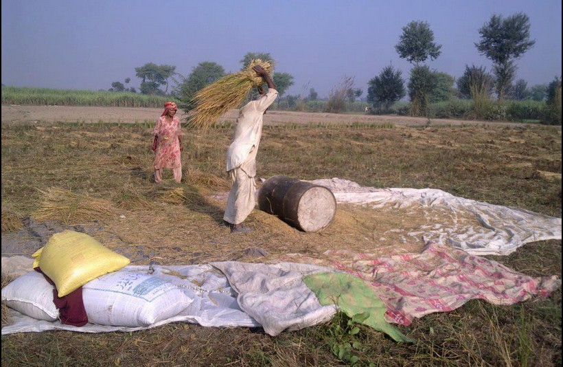 Pakistani Village Life: Photo of a Villager thrashing wheat stalks on a drum - Photos of Pakistani Villages, Pictures of Pakitani Villages