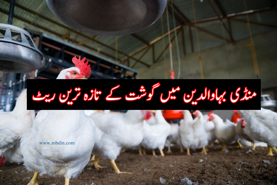 Broiler Chicken rate in Mandi Bahauddin
