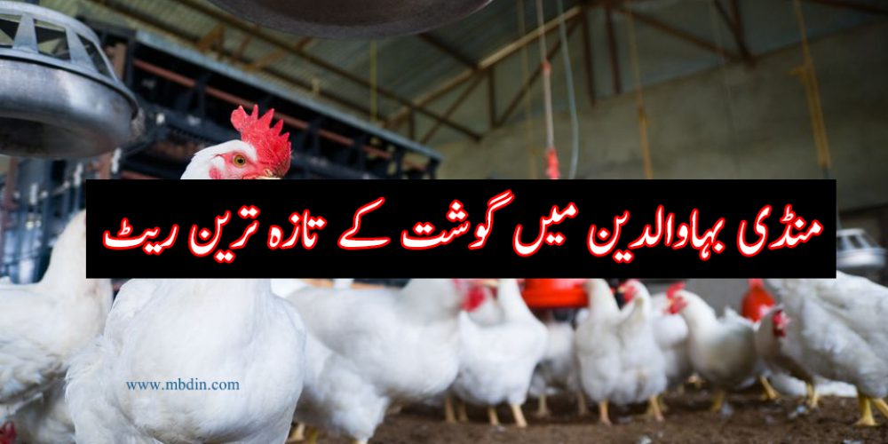 Broiler Chicken rate in Mandi Bahauddin