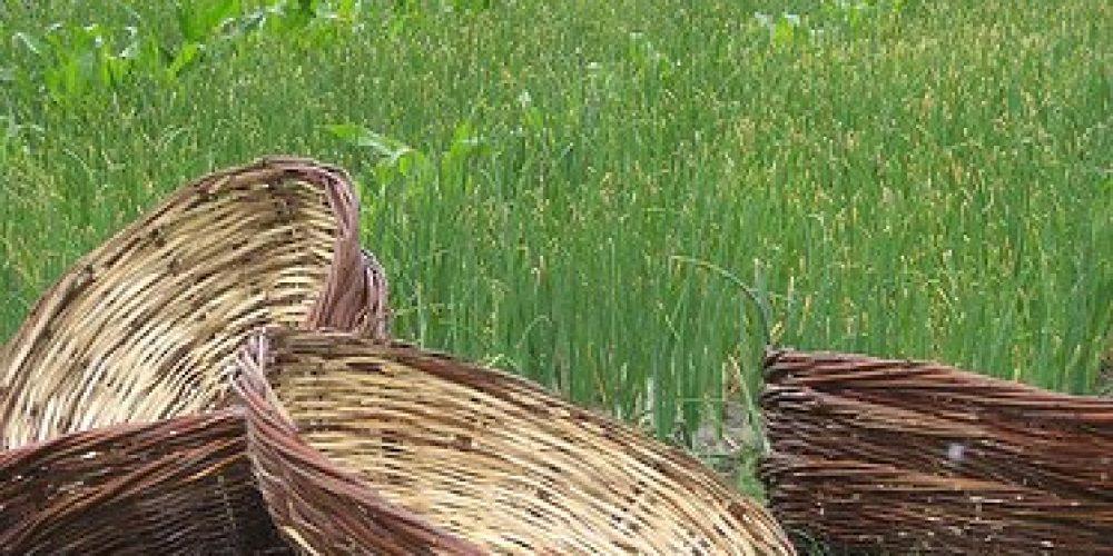 Punjabi basket weaving
